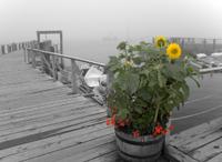 Flowerpotonwharf